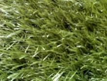 Çim | Çim Halı | Associated Carpets